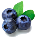 Anti-ageing body cream ingredient: blueberry
